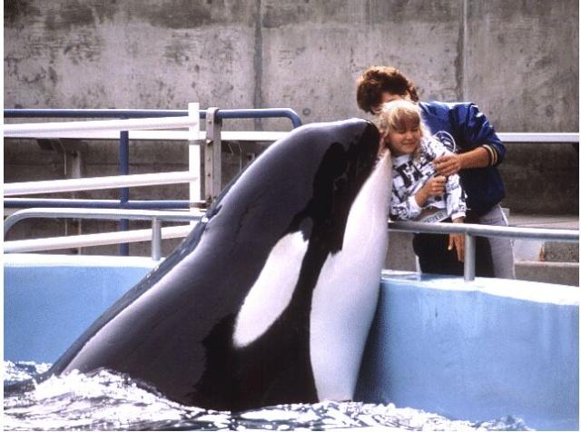 [photo] Comparaisons  impressionnantes orques / humains Yaka10