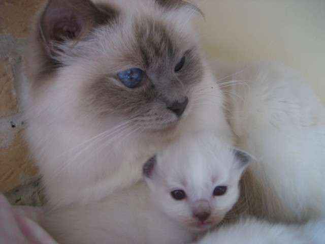 """Concours photos """"Les chats"""" du 3 février au 10 février - Page 3 1184_b10"""