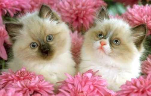"""Concours photos """"Les chats"""" du 3 février au 10 février - Page 3 6ch1ic10"""