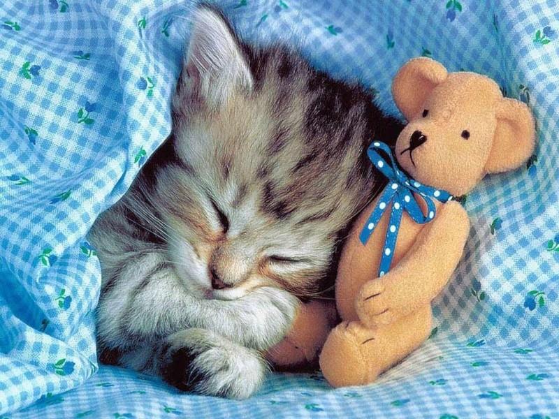 """Concours photos """"Les chats"""" du 3 février au 10 février - Page 2 Chat-e10"""