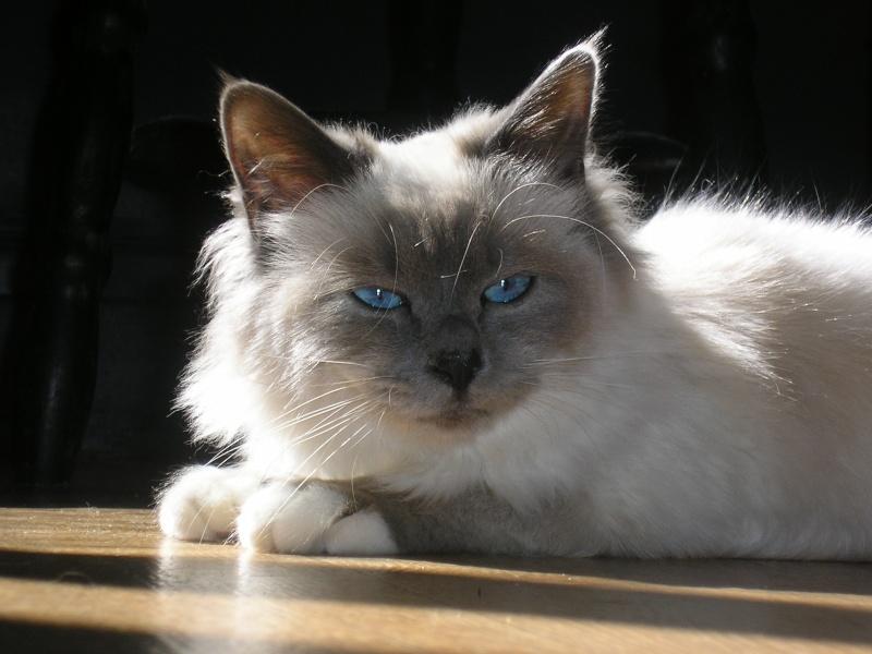 """Concours photos """"Les chats"""" du 3 février au 10 février - Page 2 Narnya10"""