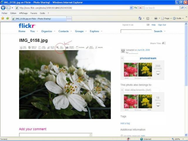 Cách chèn hình ảnh vào bài viết Flick113