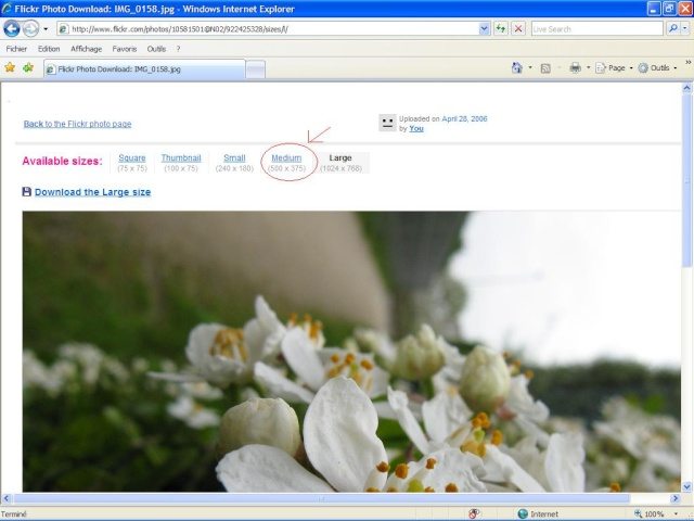 Cách chèn hình ảnh vào bài viết Flick212