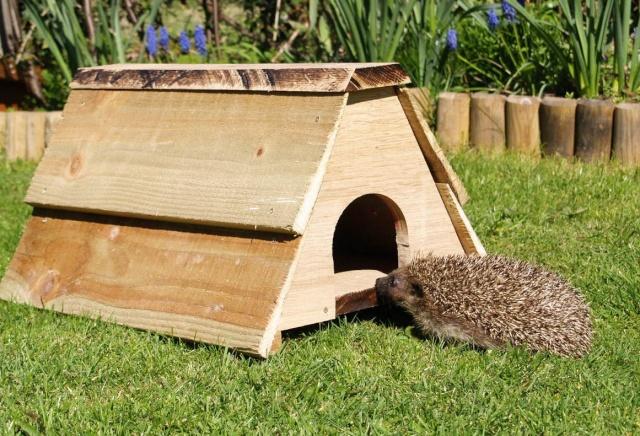 Hedgehog Box Hedgeh11