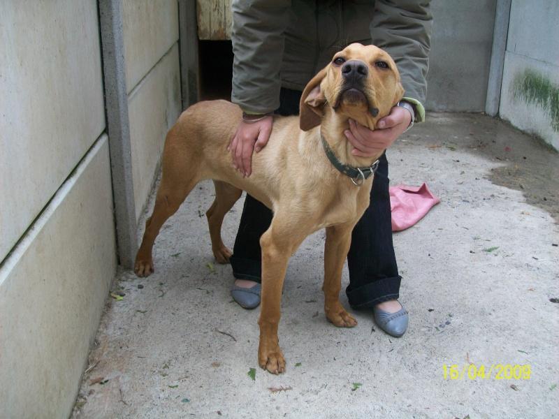 DOMINO (labrador/braque) 100_3116