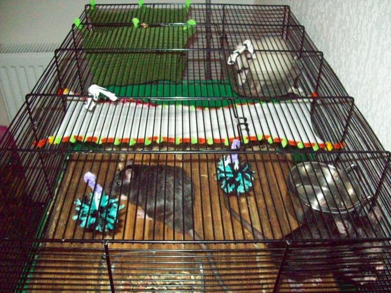 Ma cage et mes bricoles Photo_10