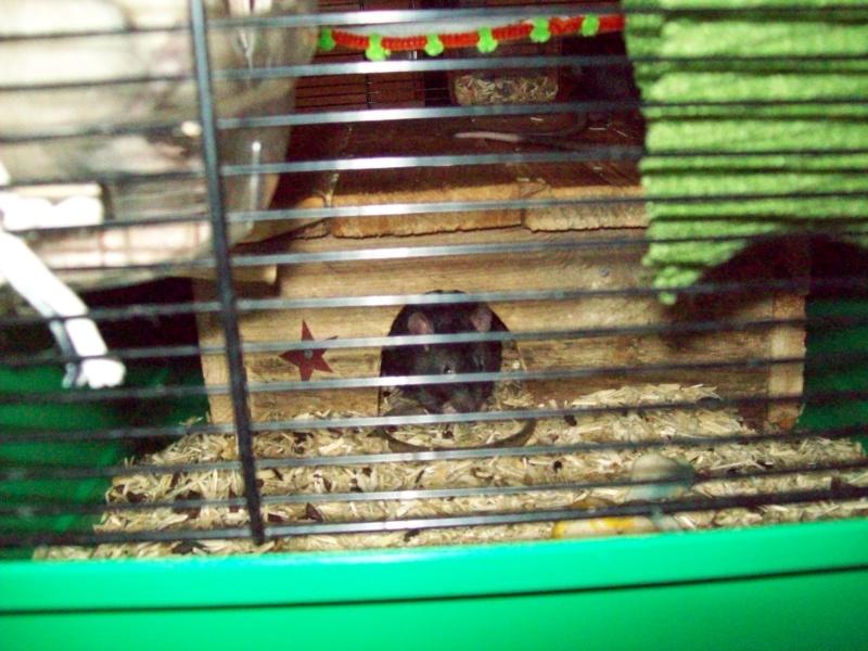 Ma cage et mes bricoles Photo_11