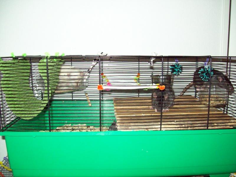 Ma cage et mes bricoles Photo_12