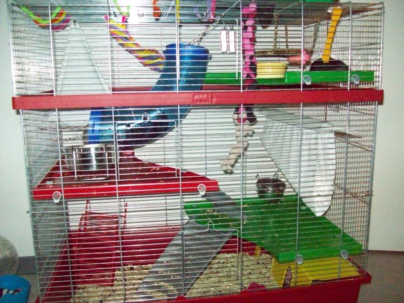 Ma cage et mes bricoles Photo_13