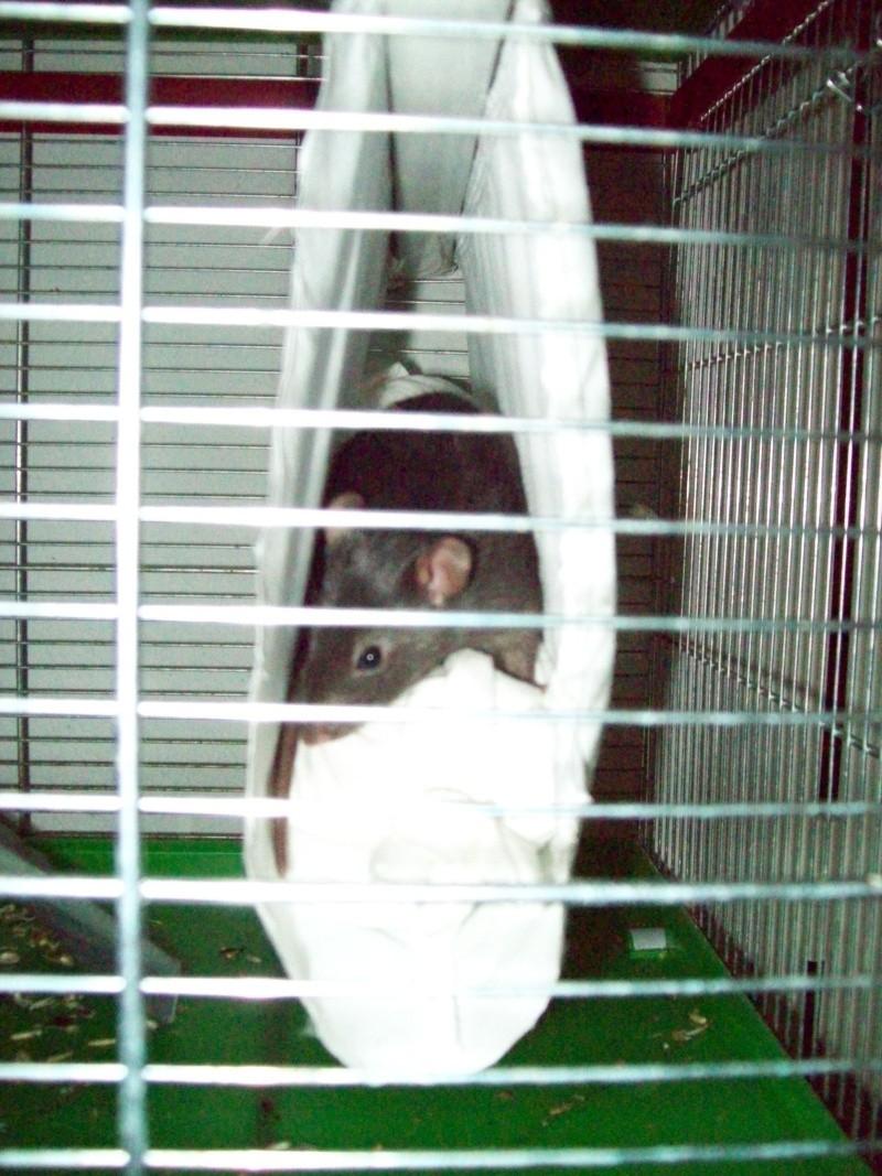 Ma cage et mes bricoles Photo_14
