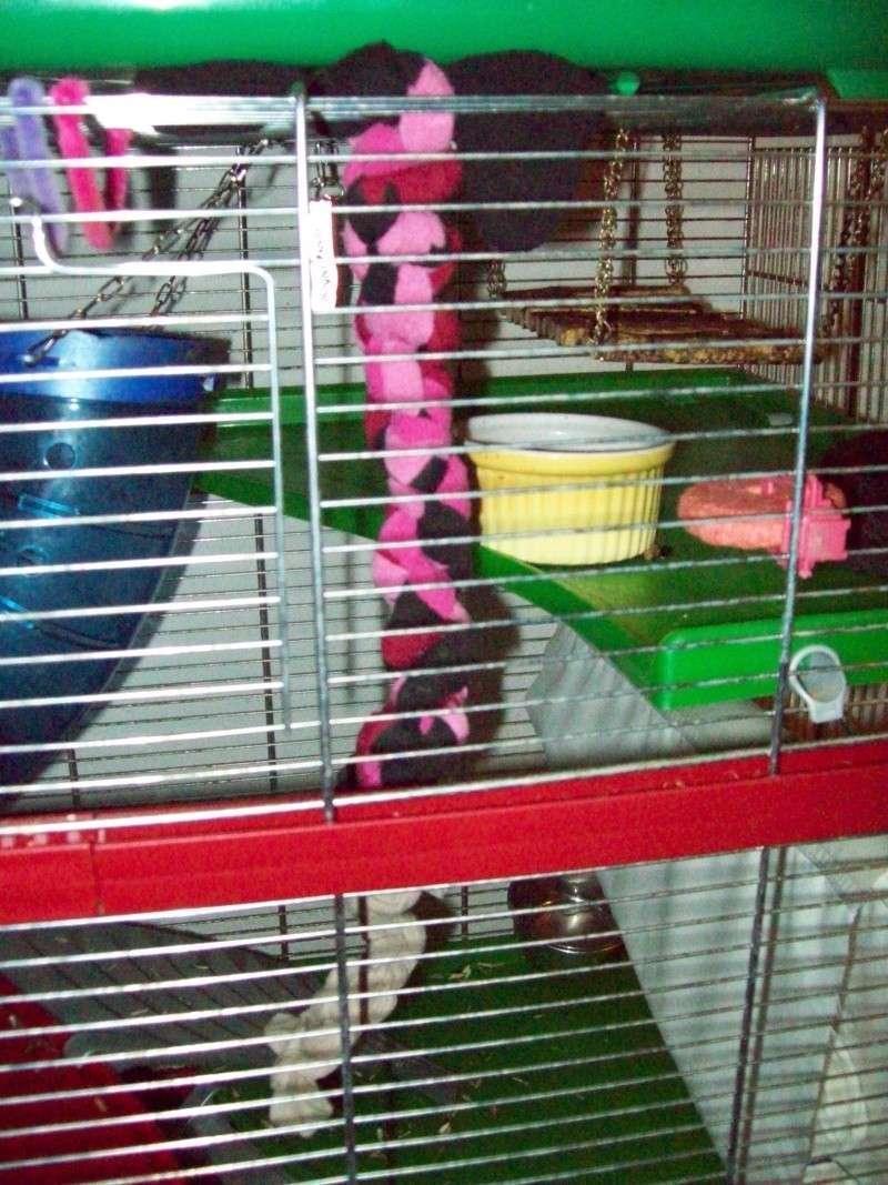 Ma cage et mes bricoles Photo_15