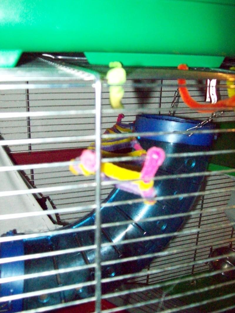 Ma cage et mes bricoles Photo_16