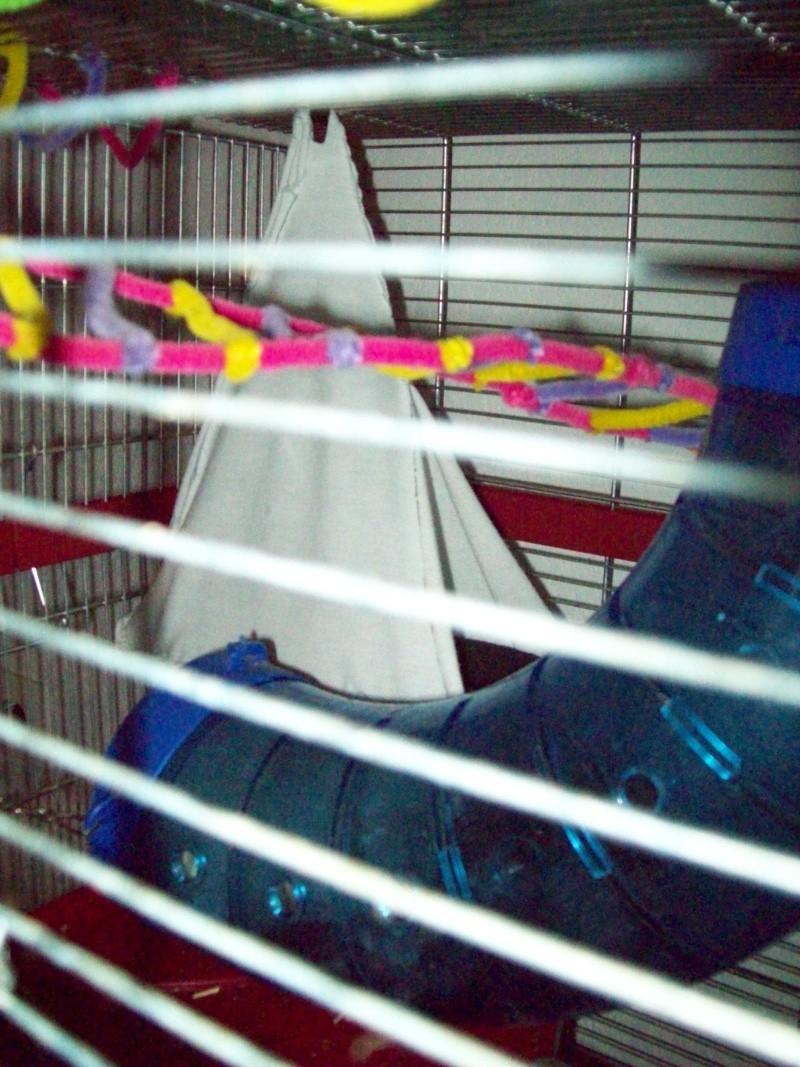Ma cage et mes bricoles Photo_18