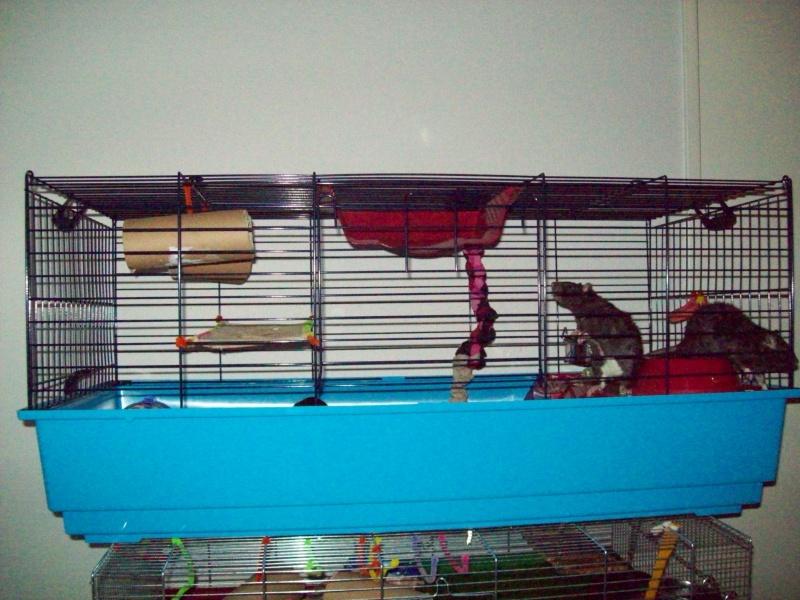 Ma cage et mes bricoles Photo_26