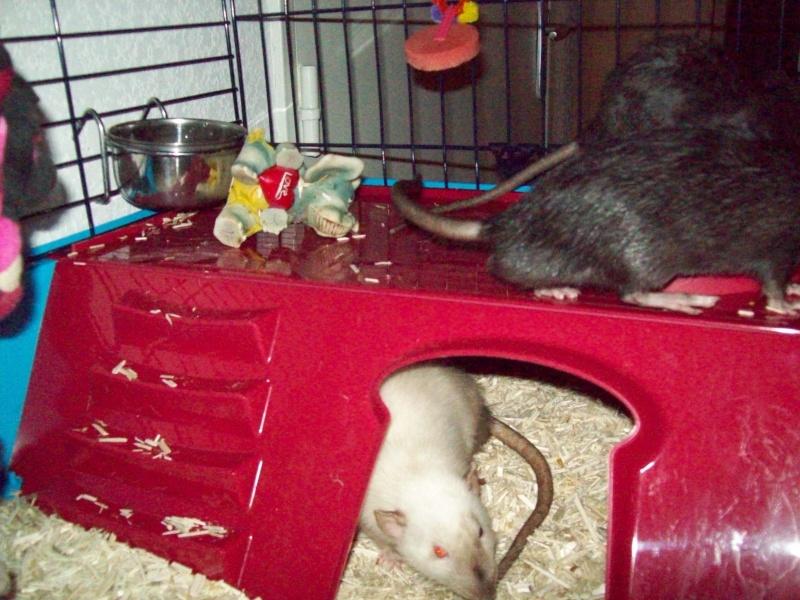 Ma cage et mes bricoles Photo_27