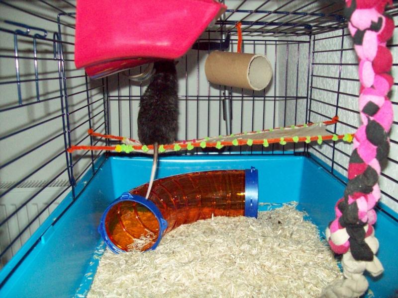 Ma cage et mes bricoles Photo_28