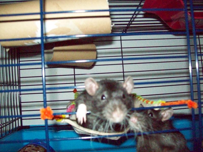 Ma cage et mes bricoles Photo_29