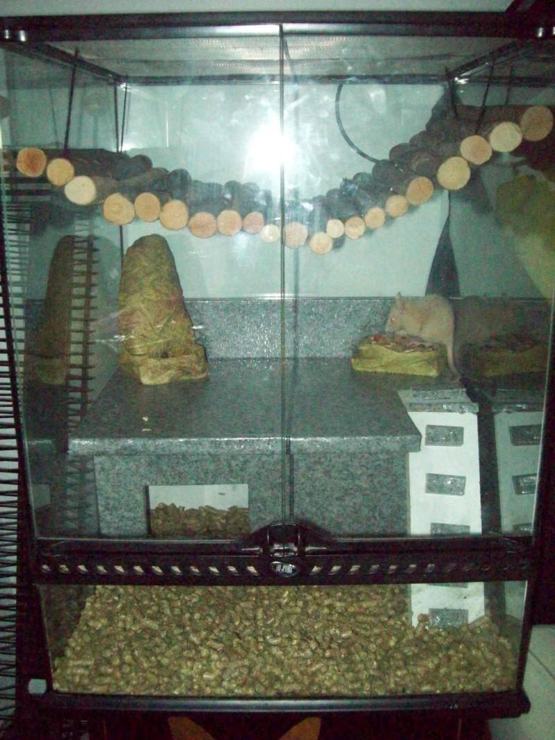 Cage pour rats ou autres... Photo_52