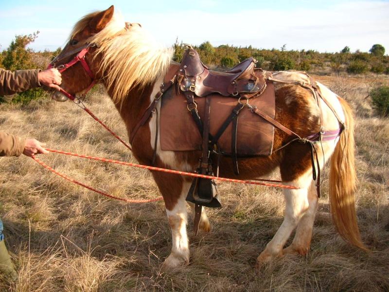 Voyage à cheval ... de plusieurs mois ... Dscn6110