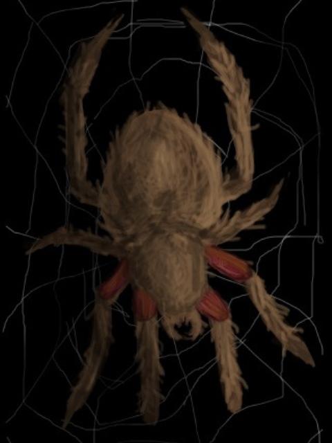 Le meilleur fond d'écran pour ce thème. LE GAGNANT EST... - Page 3 Spider10