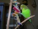 JEUX et LIEUX FAVORIS de nos oiseaux 22_mai10