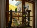 JEUX et LIEUX FAVORIS de nos oiseaux 8_01_211