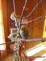JEUX et LIEUX FAVORIS de nos oiseaux Babett10
