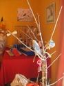 JEUX et LIEUX FAVORIS de nos oiseaux Babett11