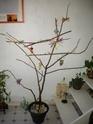 JEUX et LIEUX FAVORIS de nos oiseaux Bibou111