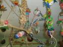 JEUX et LIEUX FAVORIS de nos oiseaux Dentel10