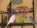 JEUX et LIEUX FAVORIS de nos oiseaux Dscn5510