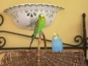 JEUX et LIEUX FAVORIS de nos oiseaux Dscn6217