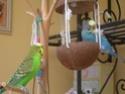 JEUX et LIEUX FAVORIS de nos oiseaux Dscn6415