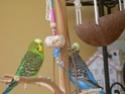 JEUX et LIEUX FAVORIS de nos oiseaux Dscn6416