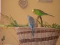 JEUX et LIEUX FAVORIS de nos oiseaux Dscn6618