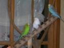 JEUX et LIEUX FAVORIS de nos oiseaux Dscn6719