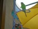 JEUX et LIEUX FAVORIS de nos oiseaux Dscn8210