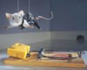 Petites souris dans volières extérieures ... New10410