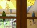 JEUX et LIEUX FAVORIS de nos oiseaux Oiseau14