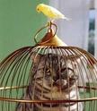 soucis avec mes perruches et mon chat. Roles_10
