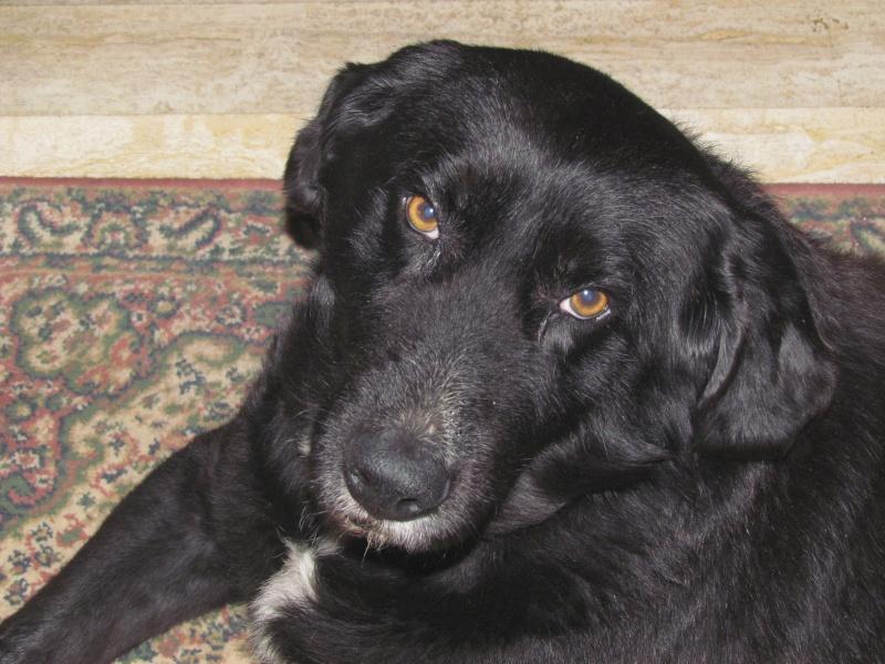 Wolf est en cours d'adoption !!!!!!!!!! Wolf adopté,puis avec son copain Doudou Img_1410