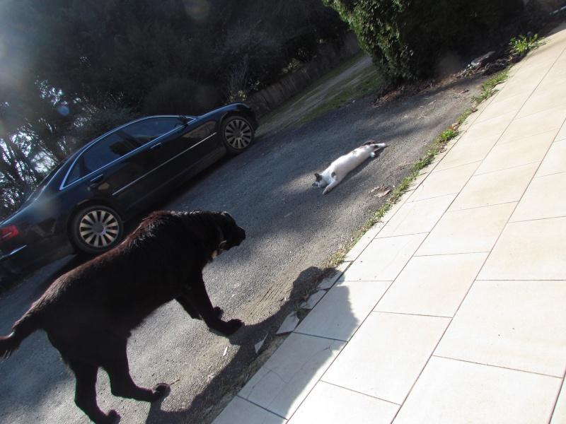 Wolf est en cours d'adoption !!!!!!!!!! Wolf adopté,puis avec son copain Doudou Img_1411