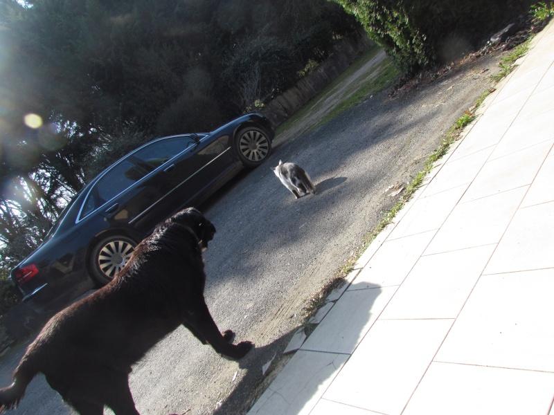 Wolf est en cours d'adoption !!!!!!!!!! Wolf adopté,puis avec son copain Doudou Img_1412