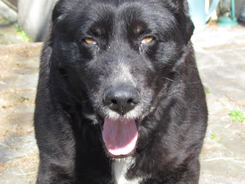 Wolf est en cours d'adoption !!!!!!!!!! Wolf adopté,puis avec son copain Doudou Img_1510
