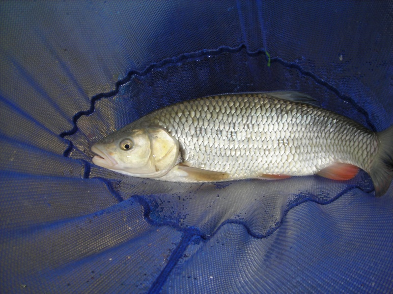 Pêche au pain en Marne Dscn1846