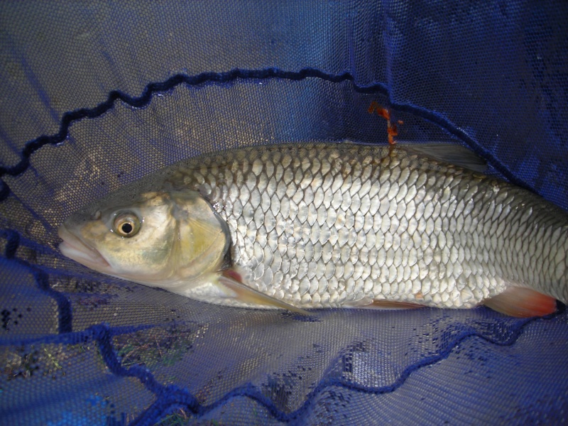 Pêche au pain en Marne Dscn1851
