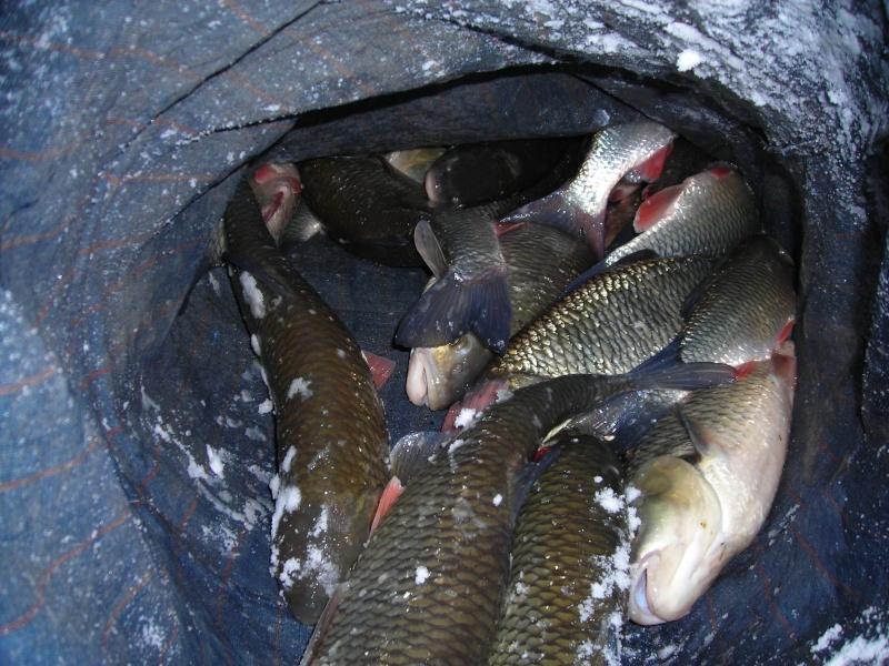 Pêche au pain en Marne Dscn1863
