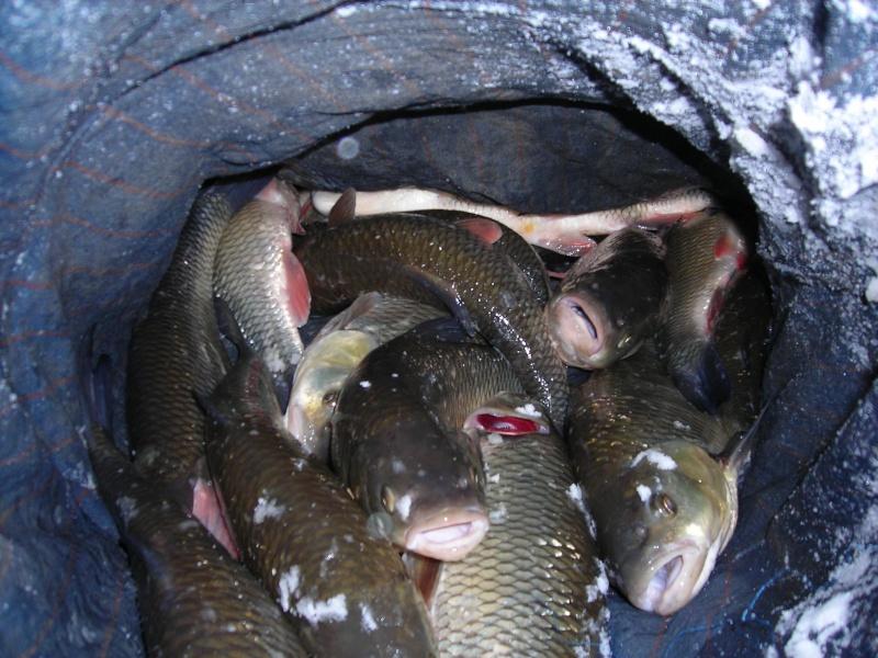 Pêche au pain en Marne Dscn1864
