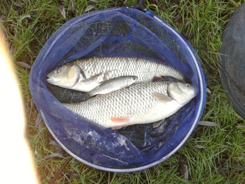 Pêche hivernale dans la Vesle Photo015