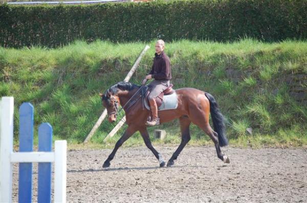 URGENT vols de chevaux belgiques Sizer_10